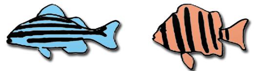 魚の縞模様『たて』と『よこ』