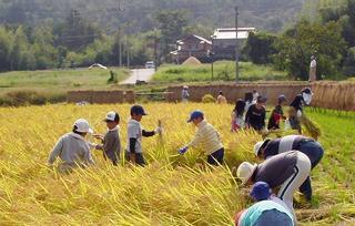 [9月24日] 今年も豊年 稲刈り体験 因島市子ども会連合会
