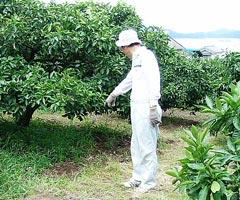 [9月27日] 島に生きる【48】生口島に千頭近く繁殖 イノシシ毎日畑に出没